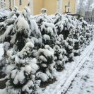 Zima - 20. február